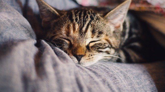 6 ways to improve your sleep each night